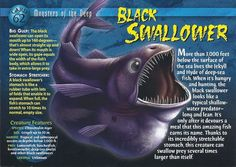 Black Swallower front