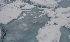 Chaque année, au moins 6,5 milliards kg de plastique sont déversés dans les océans. Un chiffre qui peut grimper pour atteindre les 8millions de tonnes de déchets par an. Cela représente 206kg de p...