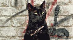 Gatto e manicure