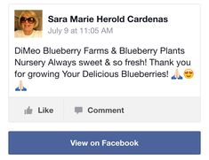 DiMeo Blueberries Review
