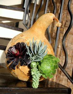 Creative gourd & succulents bird