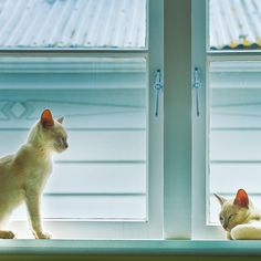 cats + window