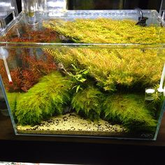 ADA mini m cube garden nature aquarium Aquarium Terrarium, Nano Aquarium, Nature Aquarium, Planted Aquarium, Aquarium Fish, Nano Cube, Floating Plants, Shrimp Tank, Nano Tank