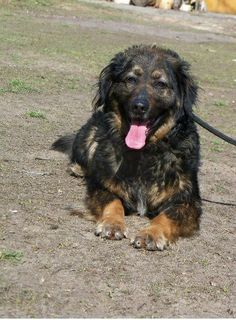 Leon is good dog, lovely and nice. But he is in animal shelter in Oborniki -Azorek. Can you give him a good home?