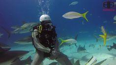 Stuart Cove's Shark Feeding Arena  #scuba #diving #shark #feeding #bahamas #caribbean