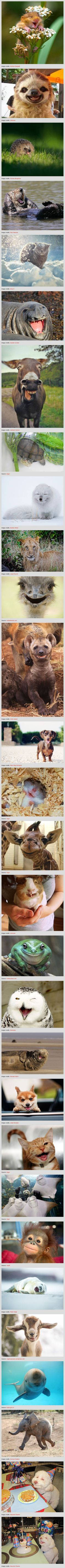 The 30 Happiest Animals In The World That Will Make You Smile - all the funny animal photos