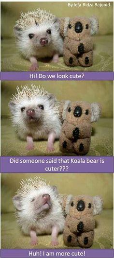 me and my koala bear!