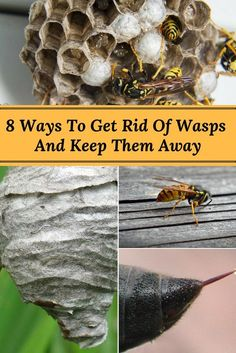 8 Ways to Get Rid of Wasps and Keep Them From Returning - As we enjoy the spring and summer seasons, we may start to notice a pesky problem arising; Wasp Deterrent, Insect Repellent, Natural Wasp Repellent, Bees And Wasps, Killing Wasps, Organic Gardening, Gardening Tips, Gardens, Tips