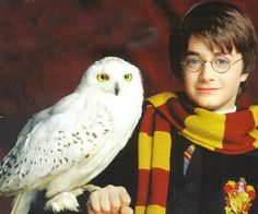 Hedwig's Theme from Harry Potter - Random String Quartet