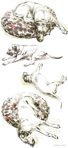 Oscar the Rhodesian Ridgeback demonstrates how he spent Take Your Dog to Work Day - Illustration by Natalya Zahn
