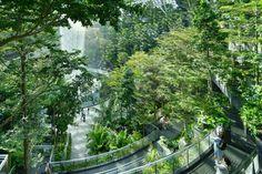 Jewel   Changi Airport, Singapore   PWP Landscape Architecture