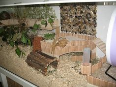 Proud of your hamsters cage - Page 381 - Supplies & Accessories - Hamster Hideout Forum