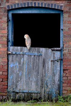 Country Living owl on door. Country Blue, Country Living, Beautiful Birds, Animals Beautiful, Milan Kundera, Photo Animaliere, Owl Always Love You, Mundo Animal, Tier Fotos
