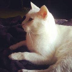 Oh Mondays are hard for some. #sleepin #mondayitis #petsitting #waggapets #waggacats #suzspetservices