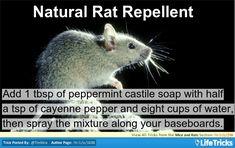 Mice and Rats - Natural Rat Repellent