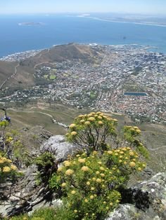 Welcome to South Africa- Table Mountain