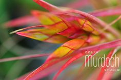 Abstract plant - Fine Art Photography For Sale at www.colinmurdochstudio.smugmug.com
