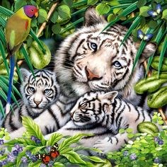 New DIY Square Diamond Embroidery Cross-Stitch White Tiger Snuggle Diamond Painting Modern Style Handmade Home Decoration Cross Paintings, Animal Paintings, Animal Drawings, Big Cats Art, Cat Art, Beautiful Cats, Animals Beautiful, Art Tigre, Tiger Artwork
