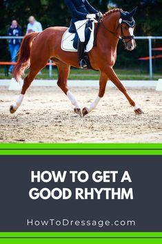 English Horseback Riding, Horse Information, Horse Exercises, Riding Lessons, Horse World, Horse Training, Horse Stuff, Dressage, Girls Best Friend