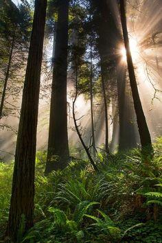 Un magnifique sous bois.....