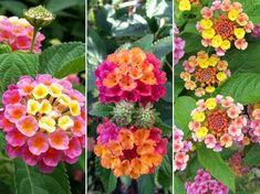 Beautiful Flowers Wallpapers, Flower Wallpaper, Garden Design, Floral Wreath, Wreaths, Balcony, Green, Scrapbooking, Gardening
