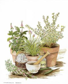 Google Image Result for http://imagecache.allposters.com/images/pic/GAM/1080~Herb-Display-1-Posters.jpg