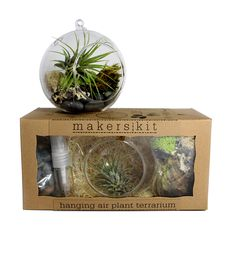 Hanging Air Plant Terrarium Kit by MakersKit on Scoutmob Shoppe. Works great for small apartment decor or to brighten up your desk.