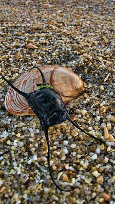 Clam shell and Mermaid's Purse on Point Pleasant Beach, New Jersey by Heather Applegate.  I love the rock pebbles.