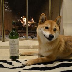 1985 Château LascombesGoing way back with this Margaux! Still... #shiba