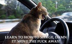 Veterinary/Animal Stuff / Cat with road rage!
