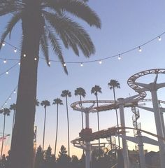 Roller coasters, palm trees, and #summer lights.