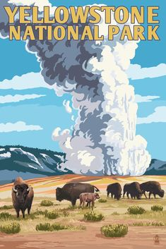 Print (Yellowstone National Park, Wyoming - Old Faithful Geyser & Bison Herd - Lantern Press Artwork) - #Artwork #Bison #Faithful #geyser #Herd #Lantern #National #nationalparks #Park #Press #print #Wyoming #YellowStone