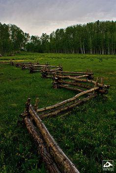 Mountain Meadow - Colorado by isaac.borrego, via Flickr