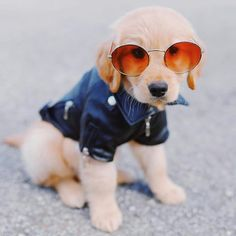 30 Cutest Golden Retriever Images That Will Make Your Day Better - Animals Comparison Golden Retriever Gifts, Baby Animals, Cute Animals, Dog Insurance, Dog Stories, Cute Dogs And Puppies, Dog Park, Animals Of The World, Dog Training