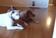 5 fáciles pasos que puedes seguir para enseñarle a tu cachorro a buscar objetos