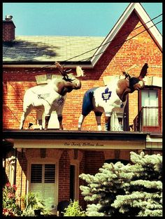 Two moose wearing team jerseys - the Toronto Blue Jays (aka The Jays) and the Toronto Maple Leafs (aka The Leafs). Toronto City, Toronto Canada, Nostalgia, I Am Canadian, Blurred Lines, Toronto Maple Leafs, My Land, City Streets, Landscape Photos