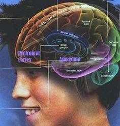 Memory loss side effect of wellbutrin photo 3
