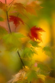 Autumn Glow by Tim Ellenburg ~ wonderful photo. Perfect imperfection!