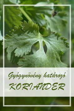 Gyógynövény határozó - Koriander HillVital A Koriander népies neve:  Bolhafű, cigánypetrezselyem, poloskaszagú kapor, koldusbors, büdöskapor, beléndfű, koriandrom, zergefű.  Hogyan gyűjtsük a Koriander gyógynövényt?  A növény érett ikerkaszat termését használják gyógyászati célokra. Health 2020, Medicinal Plants, Herbalism, Health Care, Essential Oils, Healing, Herbs, Cilantro, Herbal Medicine