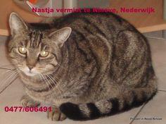 """Vermist, Nastja, gecastreerde kater van 12,5 jaar oud, vermist sinds dinsdag 14/10/2014. Contacteer Jurgen op jsmisch@gmail.com of op 0477606491."""""""