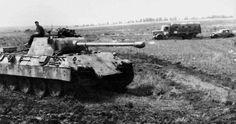 Panther D ...502