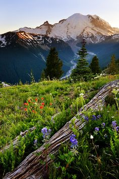 Mount Rainier, United States | See More Pictures | #SeeMorePictures
