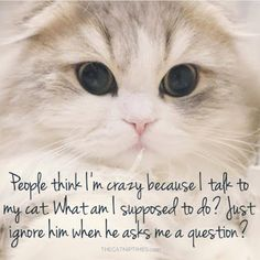 That's Purrfect: Talking To My Cat
