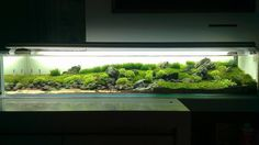 Long & low aquascape  aquarium