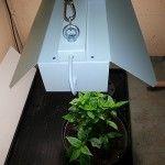 ChiliLight en växtbelysning för inomhusbruk! » Chili – Hobbyodling av chilipeppar!