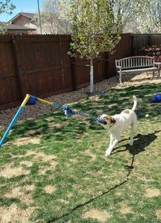 Medium Tether Tug (under 70 lb. dog) Medium Tether Tug – Outdoor Dog Tug Toy for under 70 lb. Labrador Retriever, Golden Retriever, Hotel Pet, Cheap Dog Kennels, Cheap Outdoor Dog Kennels, Dog Backyard, Backyard Ideas, Dog Friendly Backyard, Backyard Privacy