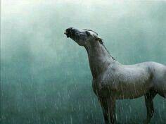 When the rain began to fall...