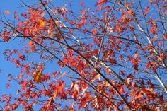 The Blessings of a Slow Family in Autumn @Rhythm of the Home