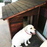 Large Dog House - Step by step Plans | HowToSpecialist - How to Build, Step by Step DIY Plans Large Dog House Plans, Extra Large Dog House, Build A Dog House, Cool Dog Houses, Play Houses, Large Dog Breeds, Large Dogs, Dog House With Porch, Insulated Dog House