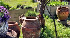 antique vases and of olive oil jars